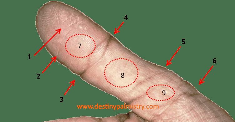thumb lines
