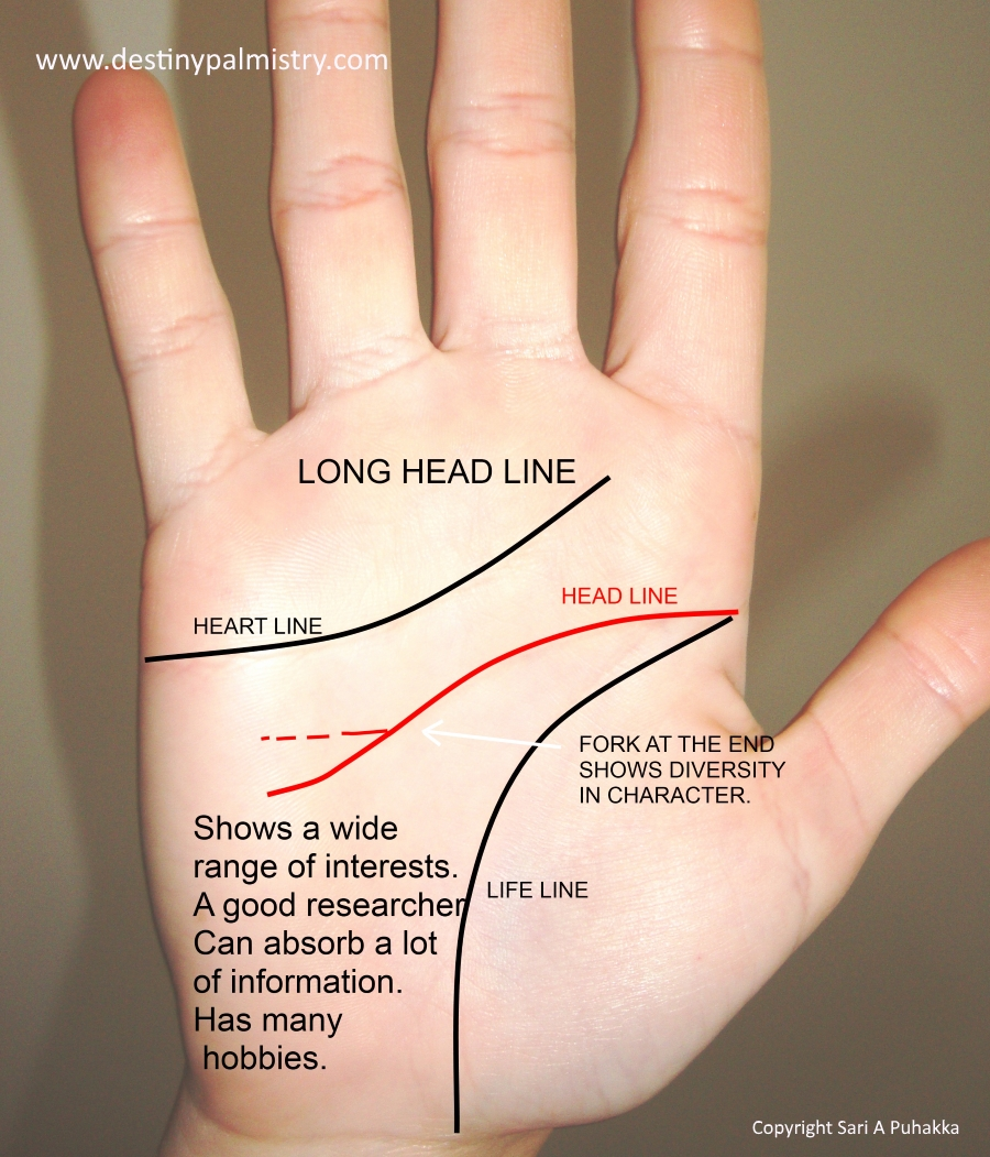 long head line, best palm reader in the world, who is the best palm reader in the world?, the best palm reader in Australia, the best palm reading website in the world, professional palm reader, master palmist,
