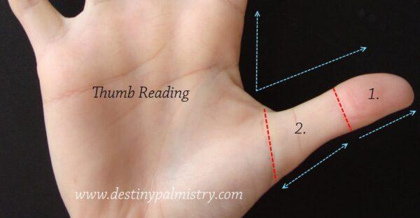thumb reading, small thumb, large thumb, palmistry thumb
