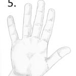 air hand shape, palmistry hand analysis
