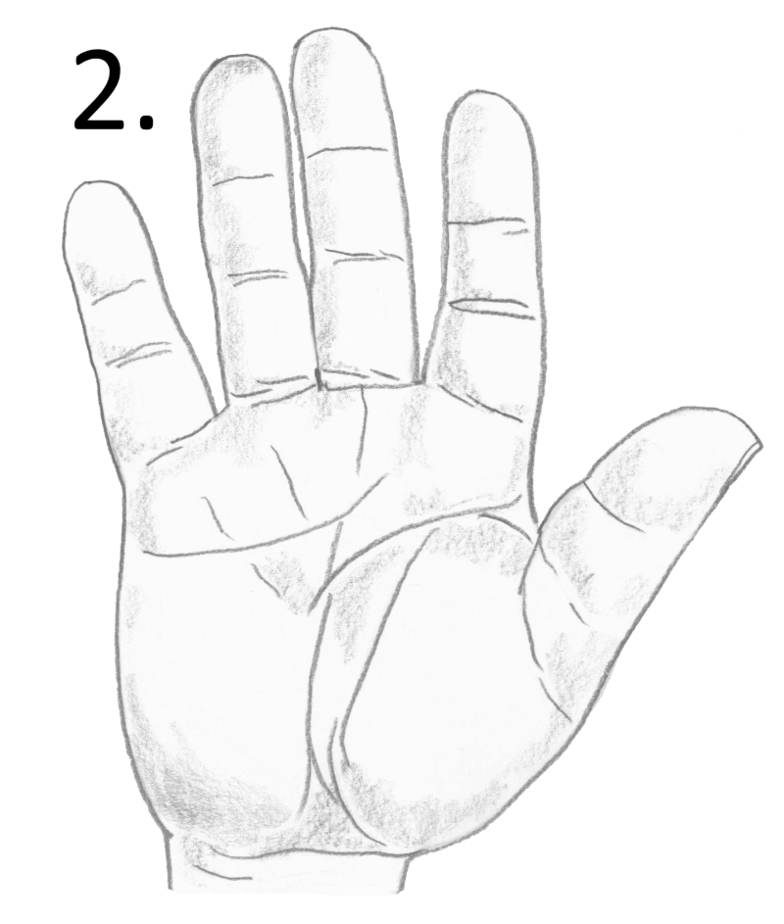 fat palm