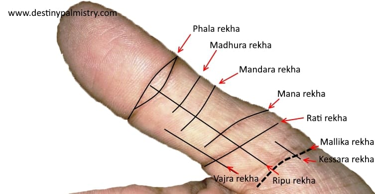 indian thumb reading