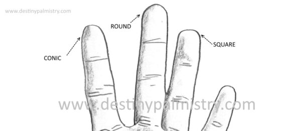 fingertip shapes palmistry