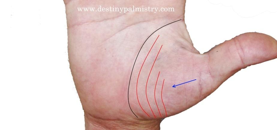 Venus mount lines, lines on venus mount, support lines, sister lines, mars lines