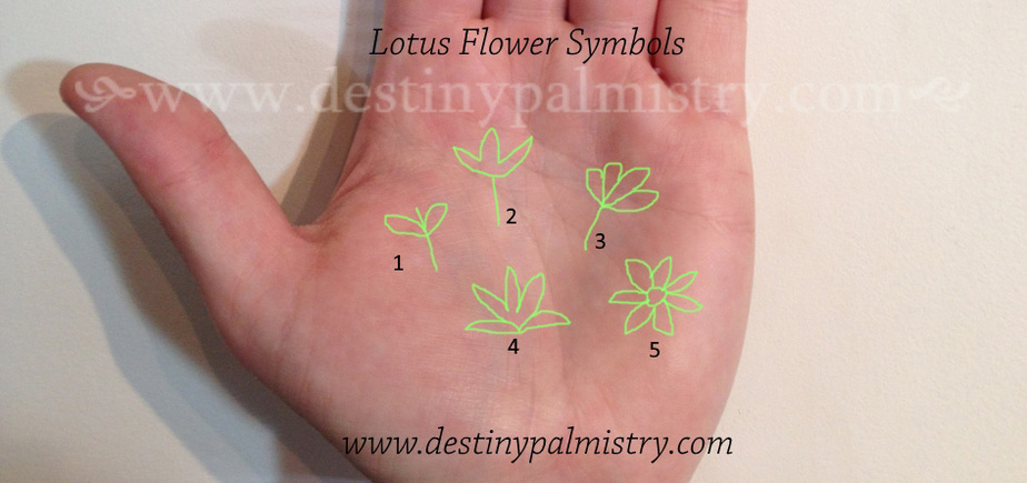 lotus flower symbol, lotus sign, palmistry lotus sign, palm symbol lotus flower, lotus flower sign, palm signs,