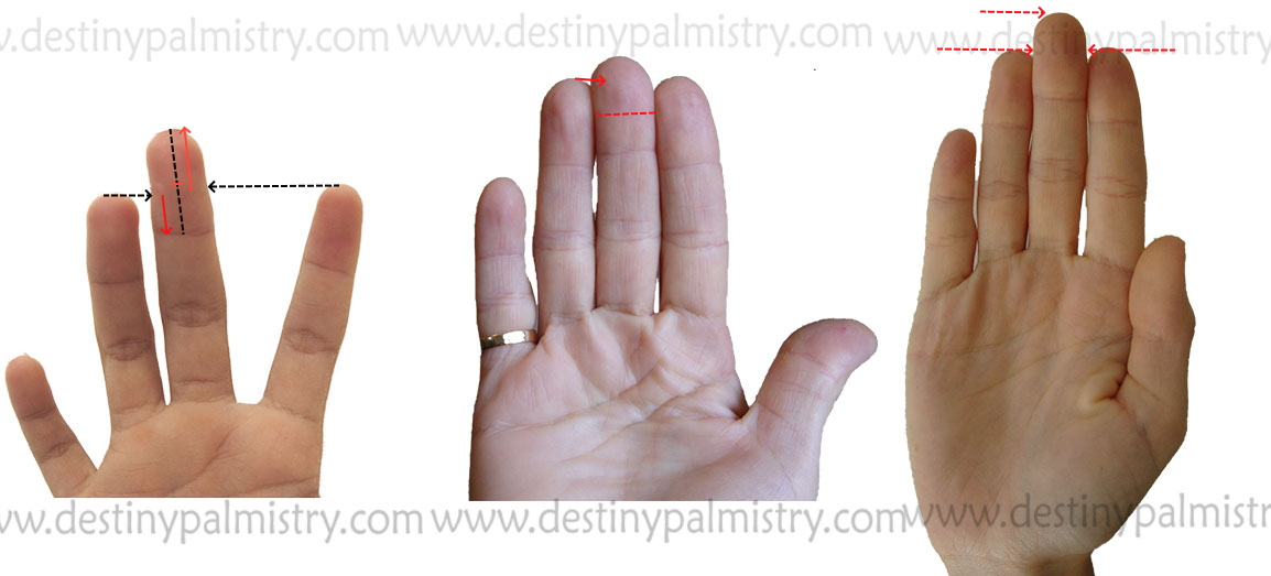 middle finger length palmistry