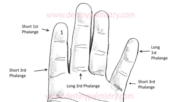 finger phalanges